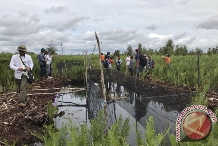 30 thousand hectares peat in South Kalimantan immediately restored