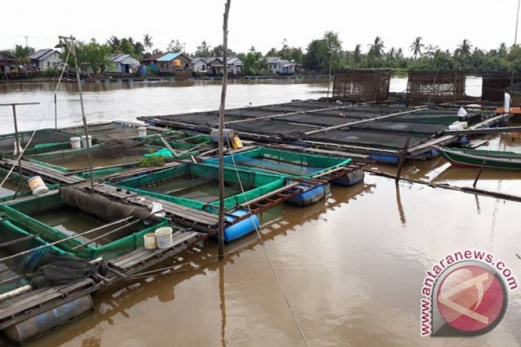 Tabalong to Produce 8,800 tons Keramba Fish