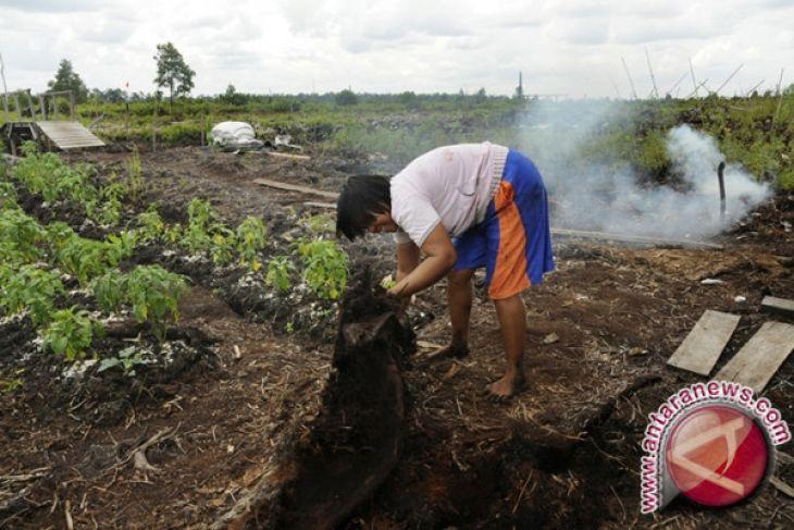 DPRD: Gambut Miliki Fungsi Beragam