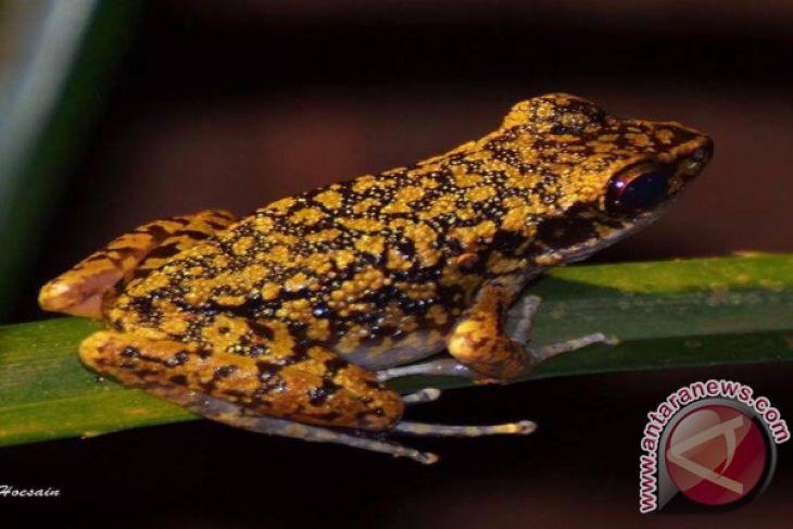 Pulau Kalimantan Kaya Kehidupan Amfibi