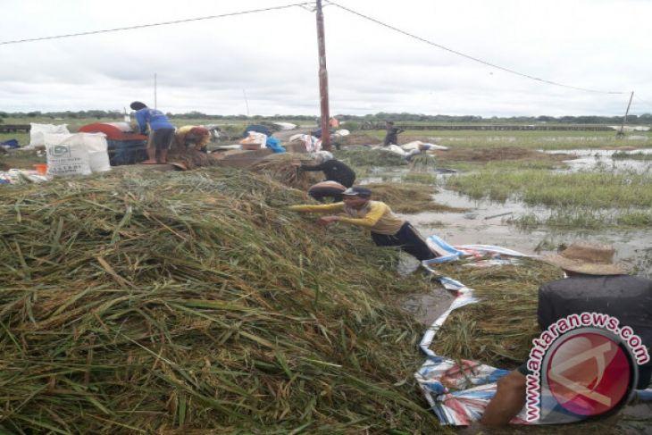 Banjir Ancam 59 hektar Sawah Gagal Panen