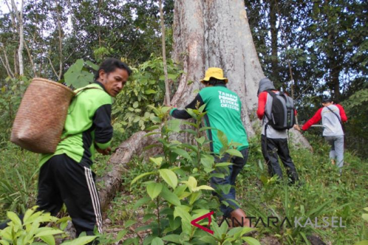 Balitbanghut Research a Large Red Durian Tree