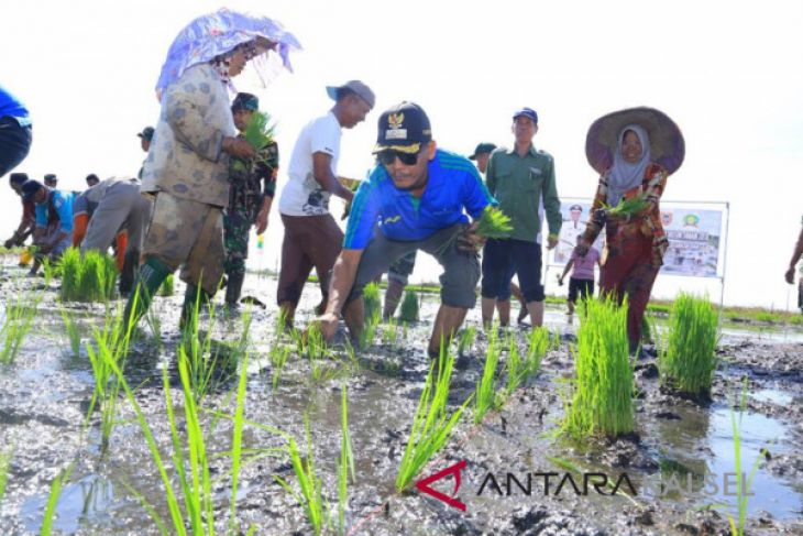 HSS promotes rice planting movement on lowland