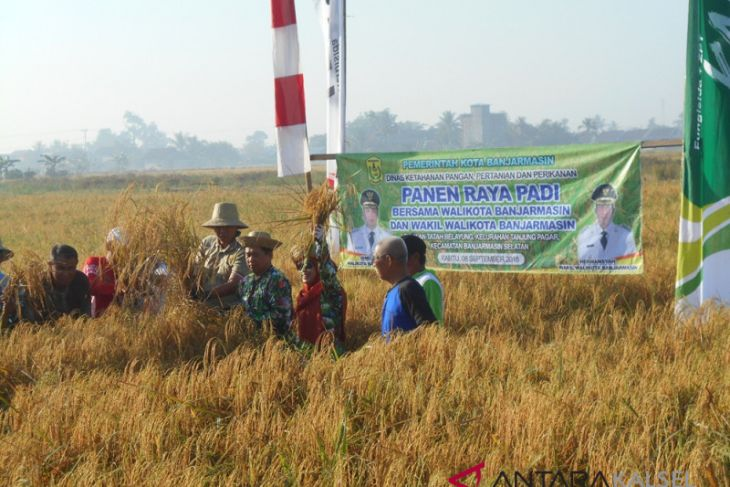 Banjarmasin to maintain rice fields for food security