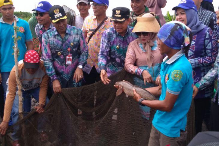 Bupati Tapin Hadiri Panen Raya Ikan Gabus