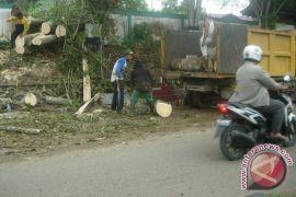 Petugas Bersihkan Pohon Tumbang Akibat Angin Kencang