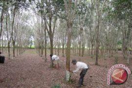 Kementan Kucurkan Rp8,8 Miliar untuk Pengembangan Perkebunan Kaltim