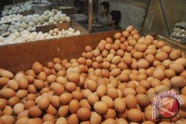 Kaltim Siapkan 2.831,88 Ton Telur Hadapi Lebaran