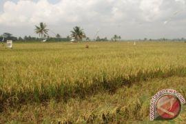 Kaltim Gelontorkan Rp352 Miliar Untuk Pembangunan Irigasi