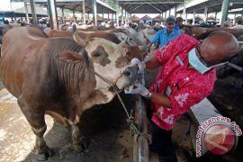 Distan Penajam awasi kesehatan hewan kurban