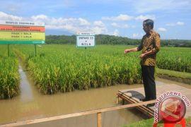 Presiden: petani keluhkan ketersediaan dan harga pupuk