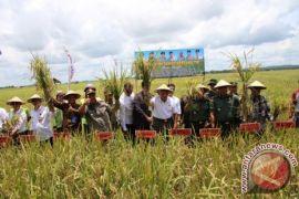 Bupati Penajam optimistis target tanam padi 21.000 hektare terealisasi