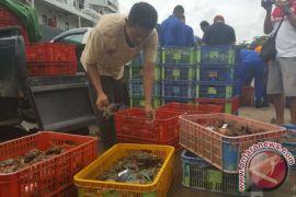 Ditpolair Gagalkan Pengiriman Kepiting Bertelur ke Malaysia