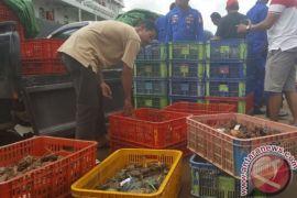 Penjualan Kepiting ke Malaysia Menjanjikan Keuntungan Besar