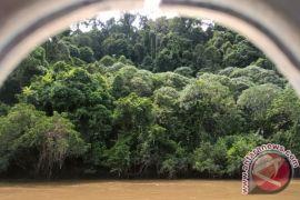 Gaharu Hutan Jadi Andalan Warga Mahakam Ulu