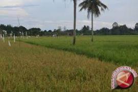 BI Perkirakan Triwulan IV Pertanian Kaltim Melambat
