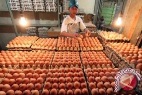 Satgas Pangan telusuri penyebab naiknya harga telur