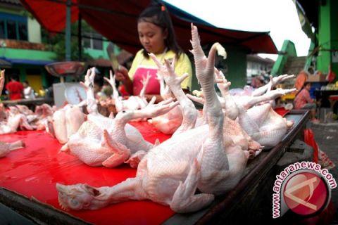 Harga ayam potong di Mahakam Ulu melonjak