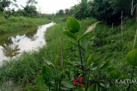 Pegiat: menyelamatkan sungai dengan beli jalur hijau