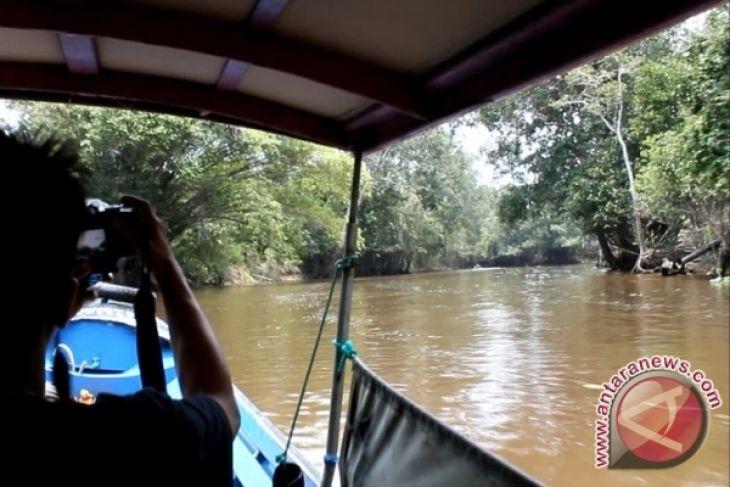 Hutan Bakau Air Tawar Jadi Ekowisata Menarik Antara News
