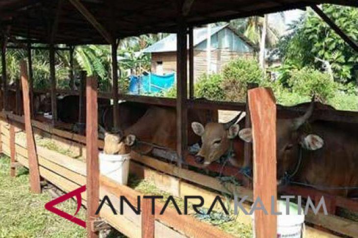 Penajam jadi sentra pengembangan sapi di Kaltim