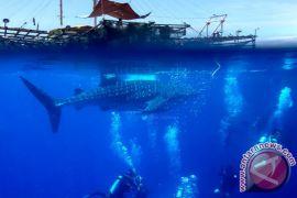 BBTNTC dorong BUMDes pariwisata Teluk Wondama