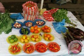 Harga Cabai Rawit di Teluk Wondama Rp.100 ribu/kg