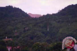 Populasi Kayu Merbau di Teluk Wondama Menyusut