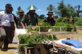Pencetakan 150 hektare sawah baru Wondama tertunda