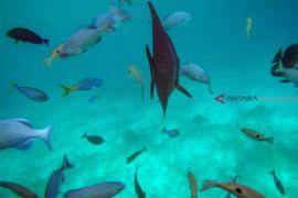 Negara Luar Apresiasi Pengelolaan Kawasan Konservasi Raja Ampat