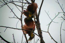 Papua Barat Kembangkan Ekowisata Terestrial Raja Ampat
