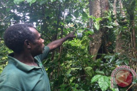 Gandeng CI, BBKSDA Papua Barat Perketat Pengawasan Tumbuhan dan Satwa Liar