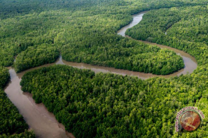 Ratusan izin pemanfaatan lahan di Tanah Papua bermasalah