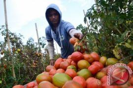 Pemprov Sumut Andalkan Lima Kabupaten Penghasil Sayur