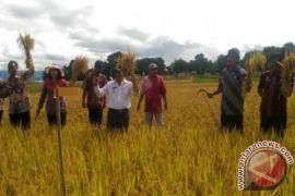 Pemkab Samosir Komit Kembangkan Sektor Pertanian
