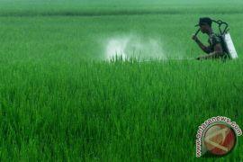 Waspadai Penggunaan Pestisida Berlebihan