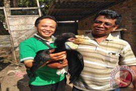 Wartawan Labura Serahkan Burung Langka ke BKSDA