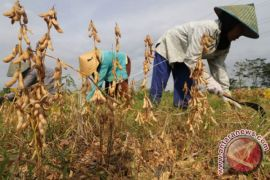 Langkat Sediakan Benih Kedelai Untuk 35.000 Hektare