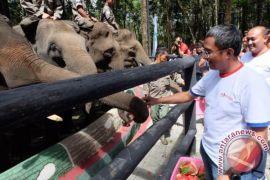 Pertamina Bantu Konservasi Gajah Di Simalungun