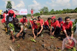 Pertamina peduli mangrove