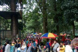 Taman hewan Pematangsiantar masih pilihan
