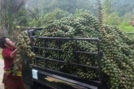 Kolang kaling Sipirok rambah Filipina