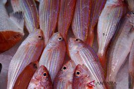 Warga keluhkan harga ikan laut