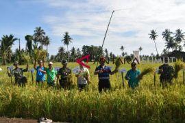 Pemkab Nias fokus sektor pertanian