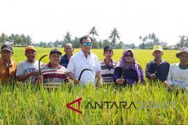 BPPT Sumut Panen padi varietas Mekongga di Sergai