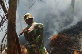 Hutan Tapsel ter (di) bakar