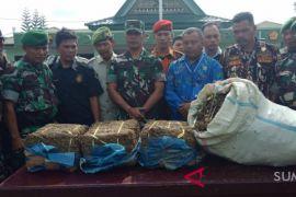 TNI temukan 2 hektar lahan ganja di Madina