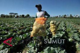 Lahan pertanian bukan sawah di Langkat 537.924 hektare