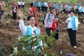 Ibu Negara tanam pohon di Samosir