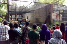 Ribuan pengunjung ke Taman Hewan